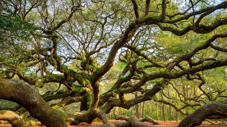 Keltski horoskop: Otkrijte koje ste drvo i kakvu osobnost imate