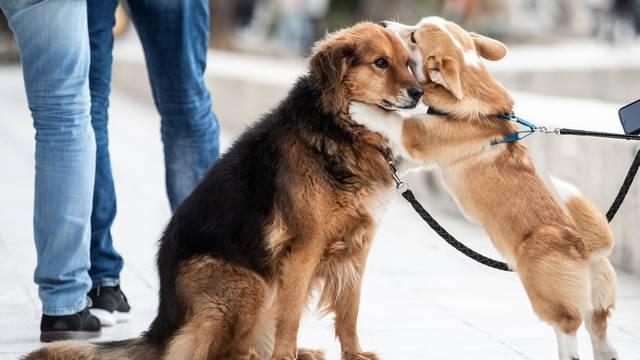 Zaigrani psi na splitskoj rivi