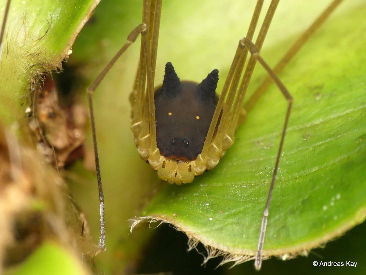 Ovo je prava životinja: Izgleda kao bizarni hibrid psa i pauka