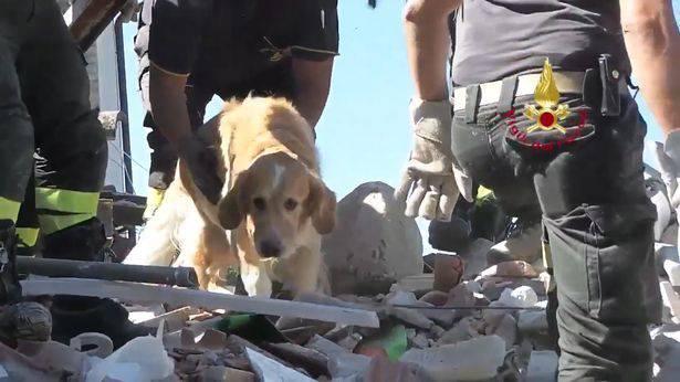 Pravo čudo: Retriver Romeo je preživio 9 dana ispod ruševina