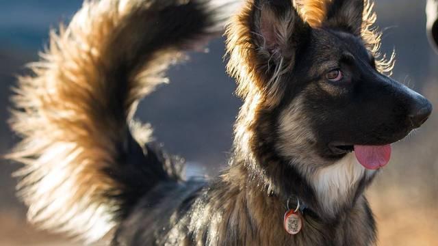 Pas Brodie sa deformiranim licem napokon pronašao dom
