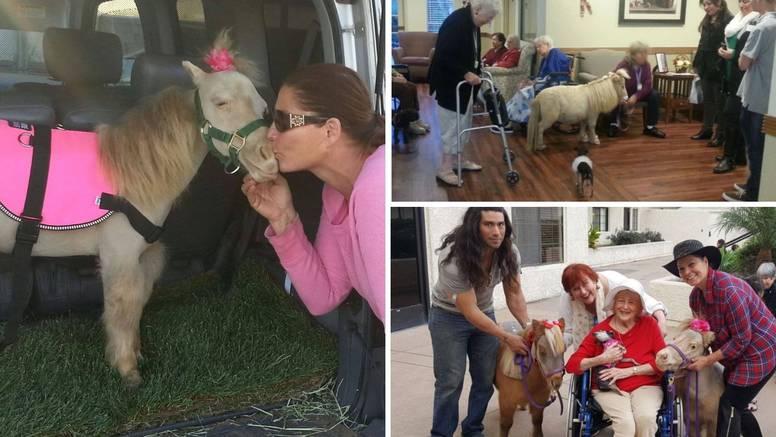 Trenira mini konje koji pomažu u oporavku mnogih bolesnika