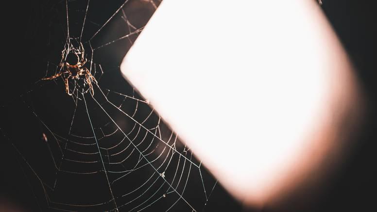 Istjerajte pauke i druge insekte iz doma uz pomoć ovih biljaka