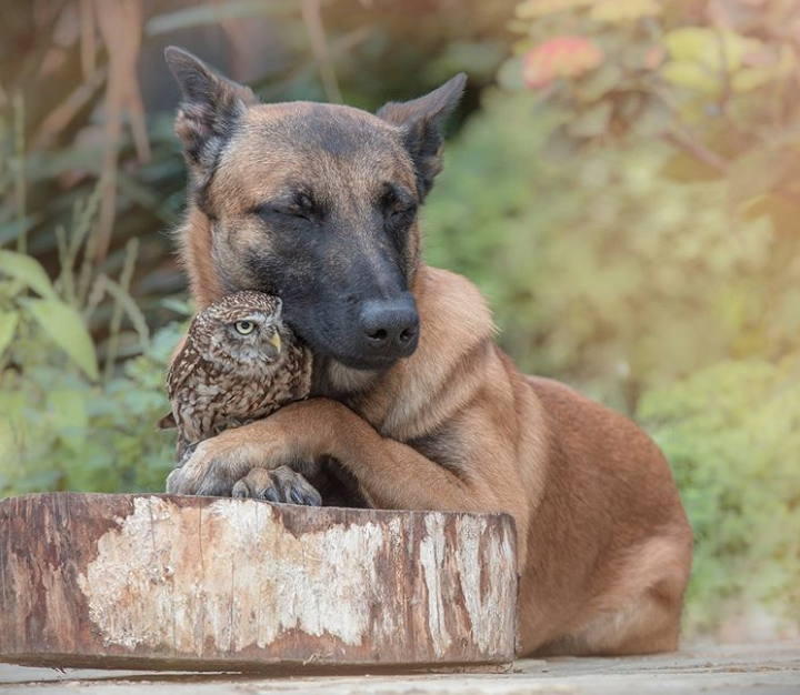 Sova Podi ostala je sama, pa ju je pas odlučio 'uzeti pod svoje'