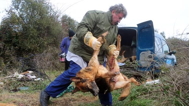 Strava kod Vodnjana: Uz cestu pronašli lešine čak devet pasa