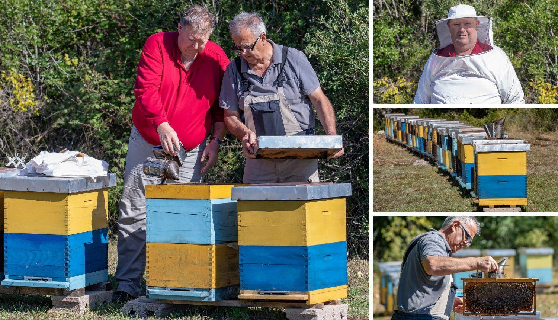 Hercegovački pčelari: Pčelinji otrov ćemo prodavati u Europi, za kilu se dobije i 20.000 eura