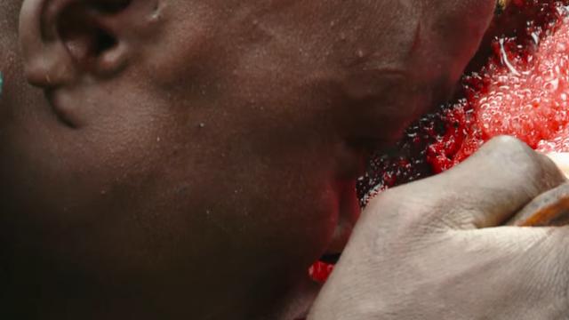 Pola godine piju samo mlijeko i krv, a cilj je biti najdeblji u selu