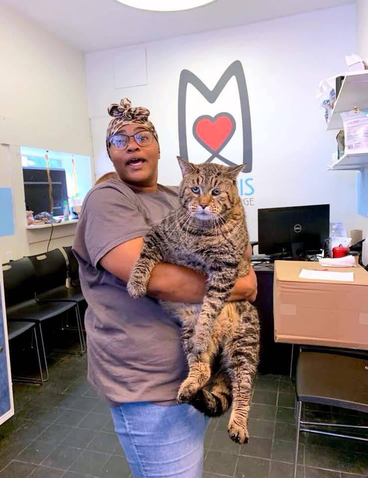 Divovska mačka koja teži čak 12 kilograma 'srušila' internet