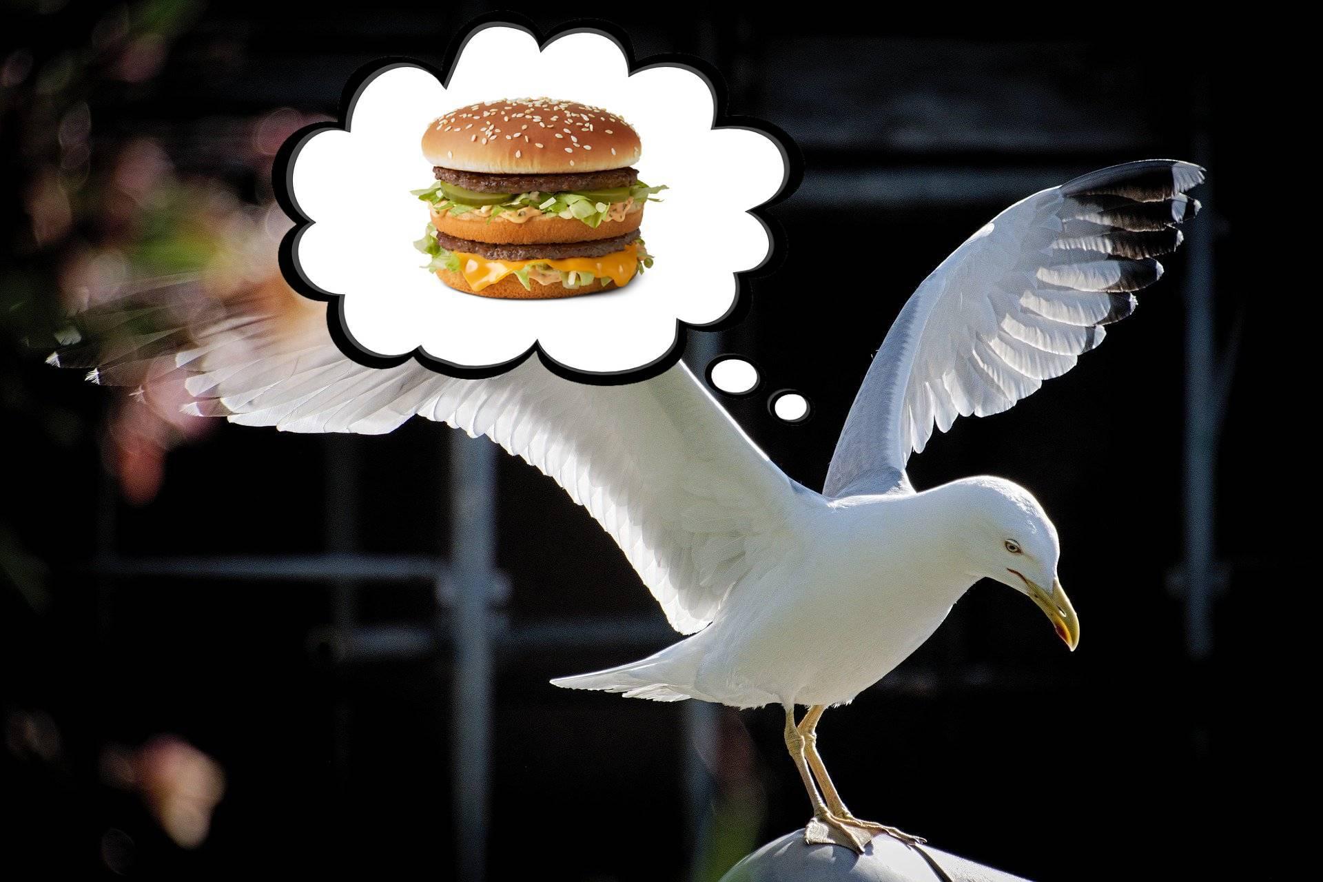 Oko za oko:  Tip ugrizao galeba koji mu je htio oteti hamburger