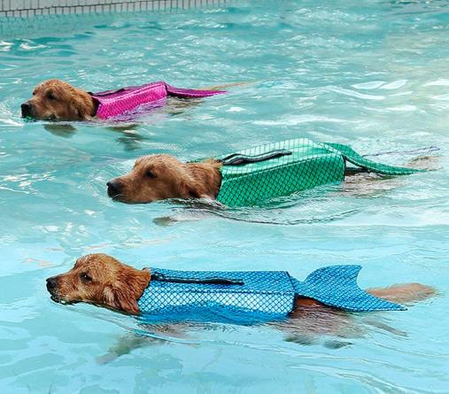 Pomoć kod plivanja: Prsluci za spašavanje 'Sirena' za štence