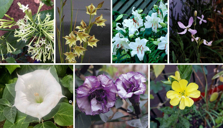 7 vrsta cvijeća koje cvjeta samo noću: Zamislite imati ih u vrtu