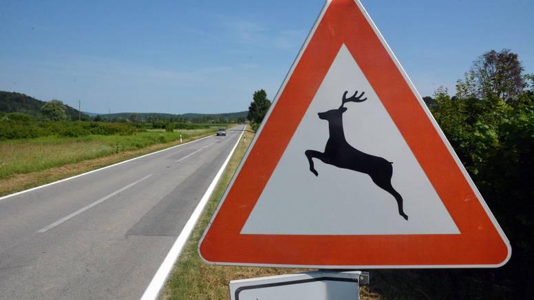 U Istri četiri naleta vozila na divljač; Policija: Budite oprezni