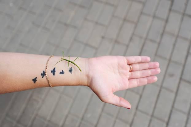 Green grasshopper sitting on a hand.
