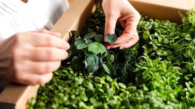 Zdrava salata od potočarke koja pomlađuje i pegla sitne bore