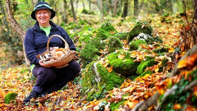 Smjernice za sigurno branje gljiva: Nikad ih ne berite nakon kiše, uvijek ih očistite u šumi...