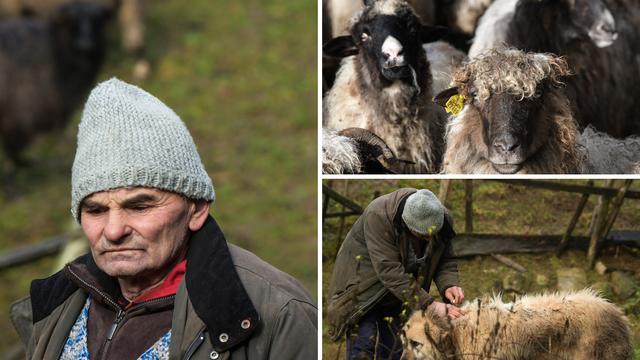 Upoznajte pastira Josu i njegove ovčice: 'Srećom, kuća mi je ostala čitava u potresu'