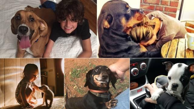 Preslatke fotografije pasa koje će uljepšati i najtmurniji dan