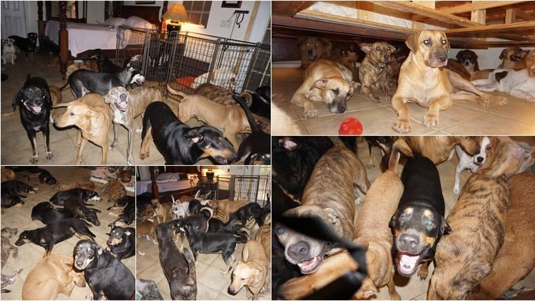 Primila 97 pasa lutalica u kuću prije uragana: 'Cura je anđeo!'