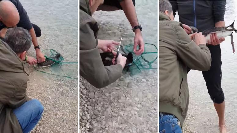Prolaznici spašavali gnjurce, zapetljali se u ribarsku mrežu...