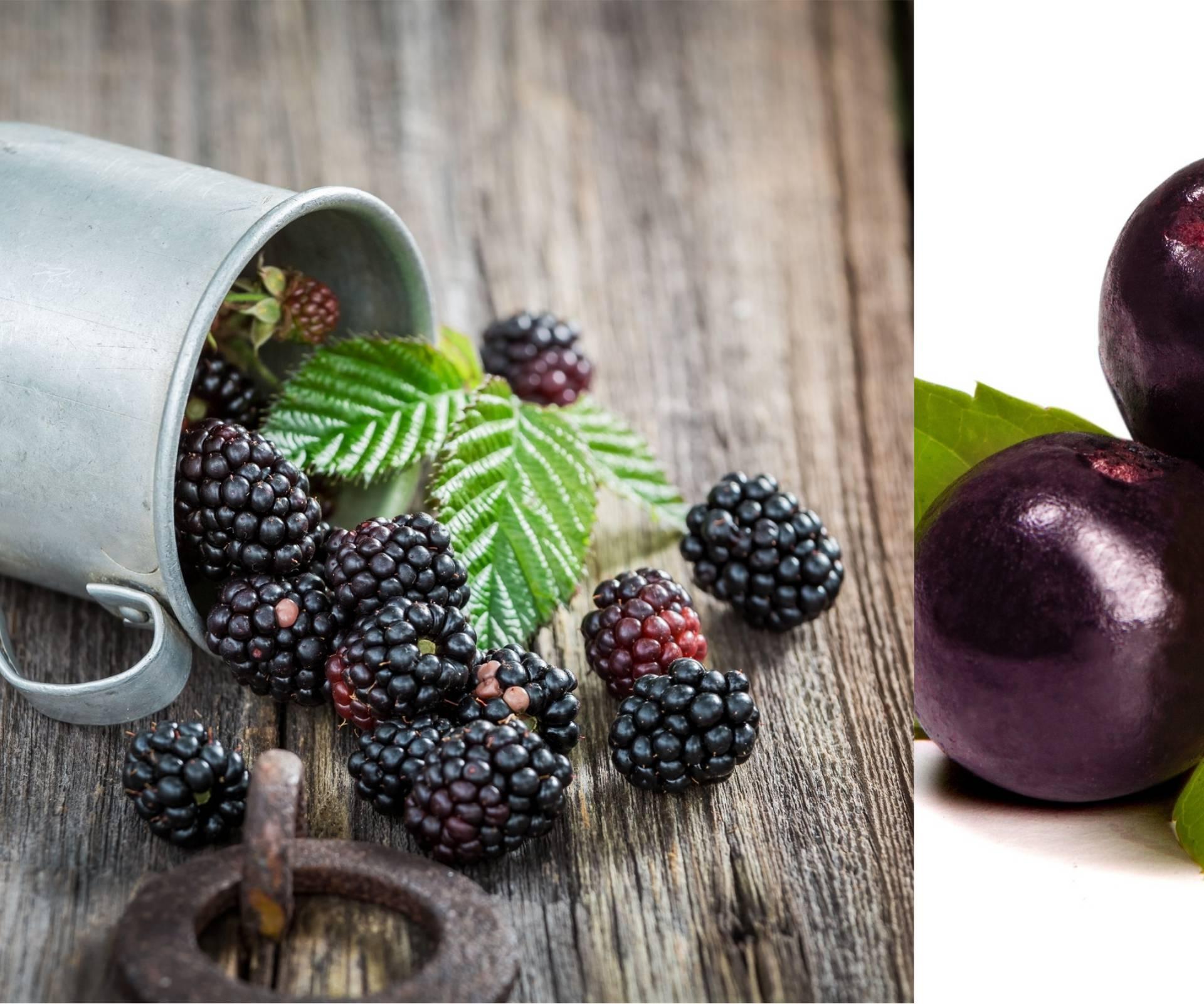 Antioksidansi: Kupine jačaju imunitet bolje i od acai bobica