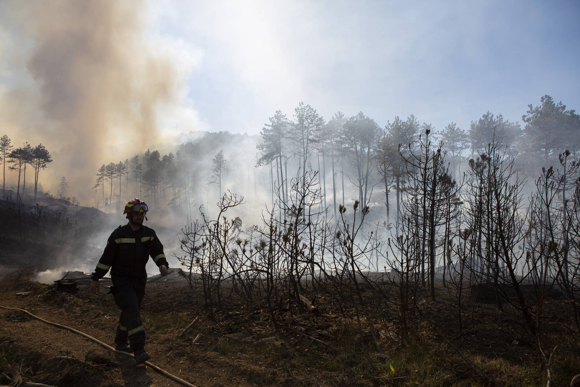 Spojila se dva požara kod Muća: Izgorjelo 50 hektara šume