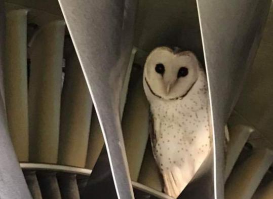 Odspavala u propeleru aviona: Sova je skoro ostala bez glave