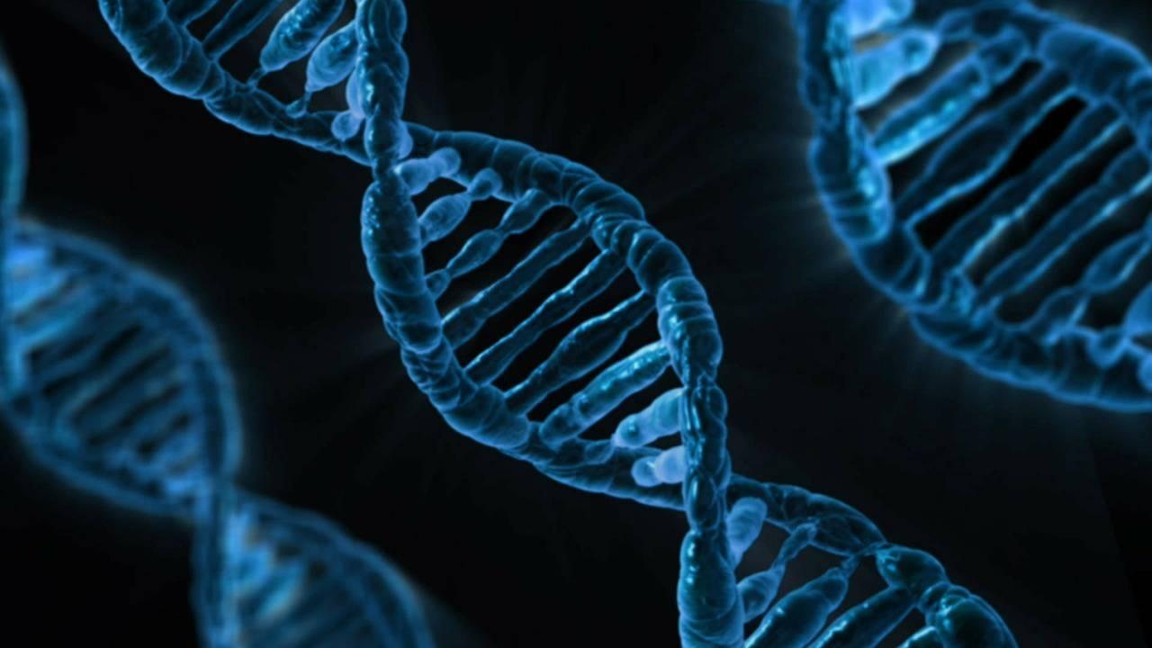 Znanstvenici predlažu razvoj sintetskog ljudskog genoma