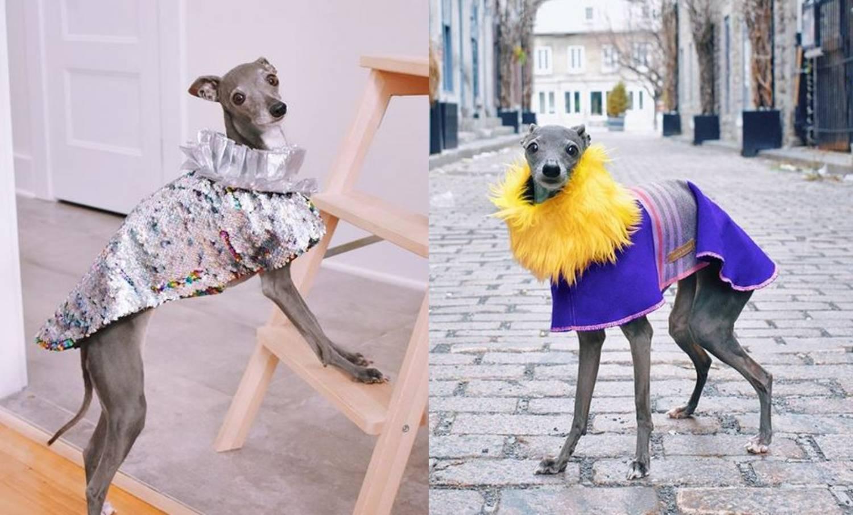 Tika je vrlo stylish pas koji ima garderobu po mjeri trendova