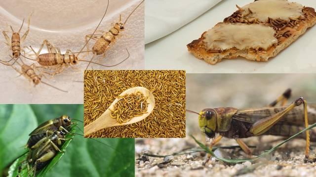Ovih pet hrskavih kukaca mogli bi nam se uskoro naći u tanjuru: 'Neki crvi su slasni kao odojak!'
