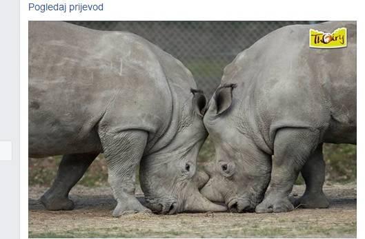 Je li moguće? Upali u zoološki, ubili nosoroga i odrezali mu rog