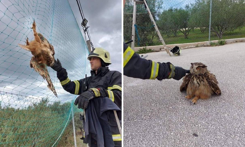 Sova se zapetljala, spasili je vatrogasci: 'Bila je pod šokom, morali smo razderati mrežu'