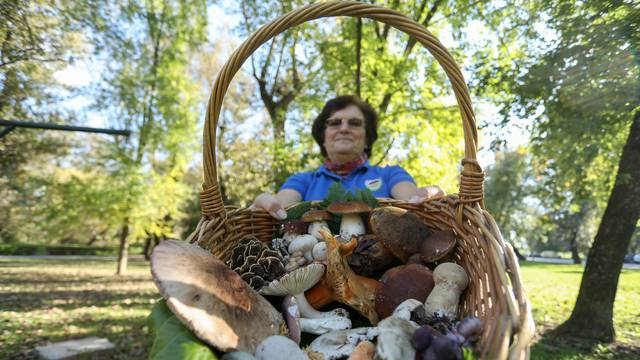 Veliki vodič: Kako prepoznati, ubrati i očistiti jestive gljive