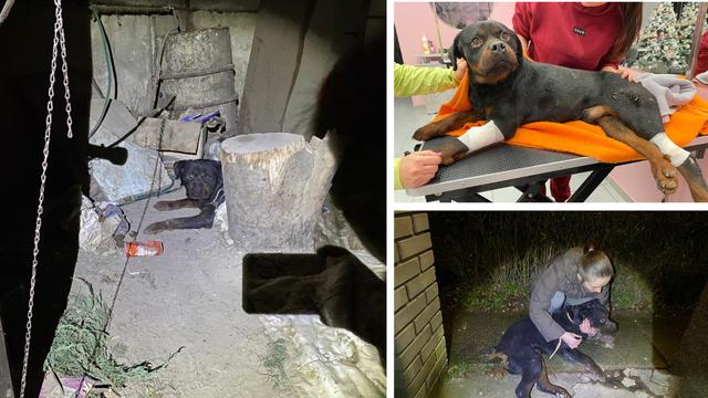 Nakon potresa otišli u Zagreb i ostavili ozlijeđenog psa: Zadnje dvije šape su mu bile oduzete...
