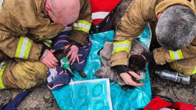 Vatrogasci kisikom oživljavali mačke koje su ostale zarobljene u kući u kojoj je izbio požar