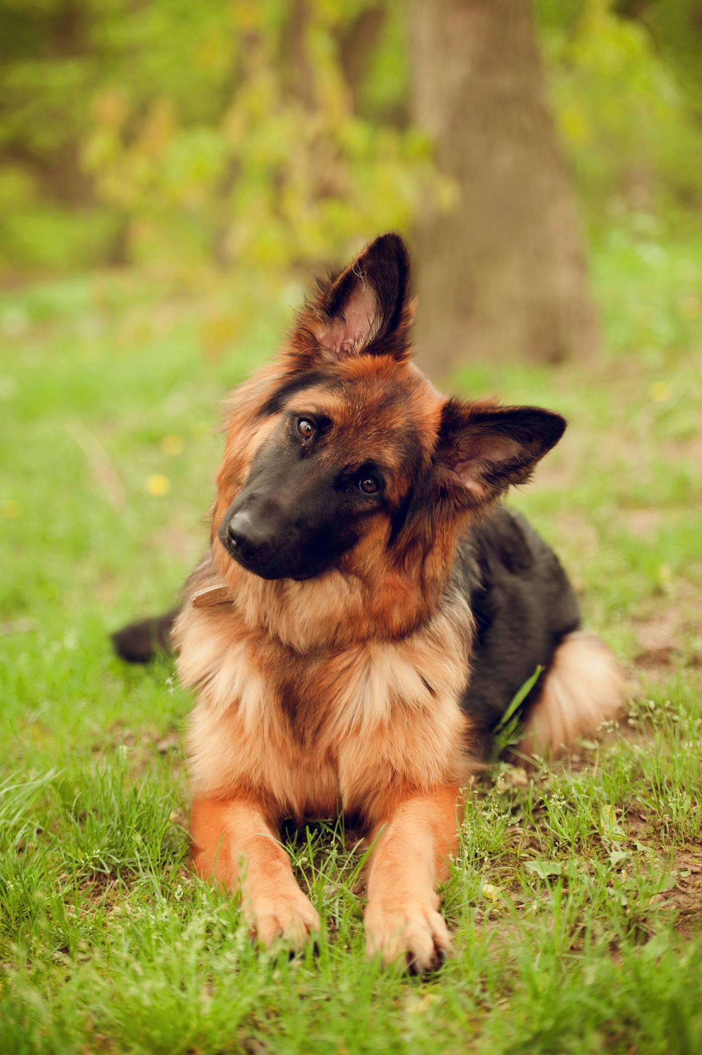 Psi u nosu imaju 'infracrveni senzor' koji detektira lovinu