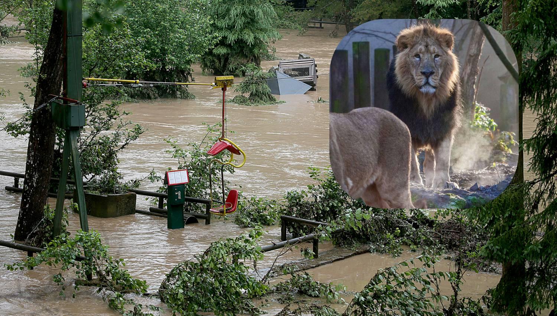 Lavovi, tigar i jaguar uopće nisu pobjegli iz svojih kaveza