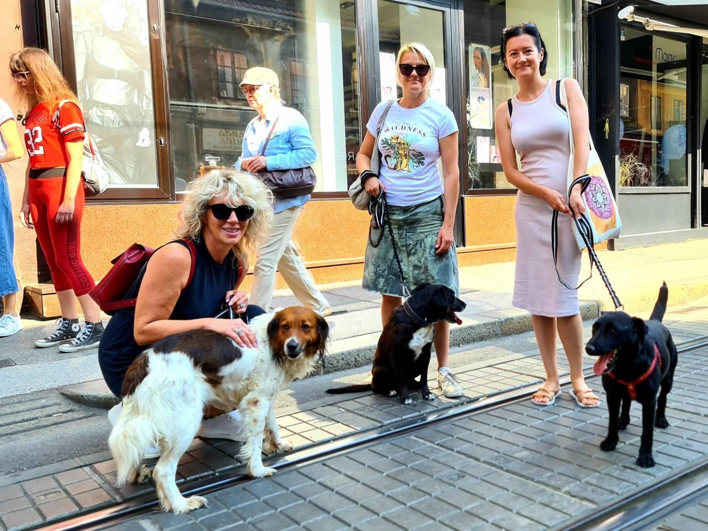 Napušteni: U praznim izlozima Ilice zrcalili su se napušteni psi