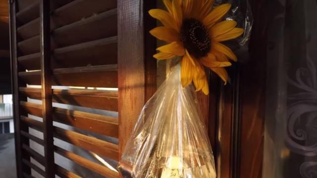 Jednostavan trik: Evo kako se riješiti dosadnih muha u kući