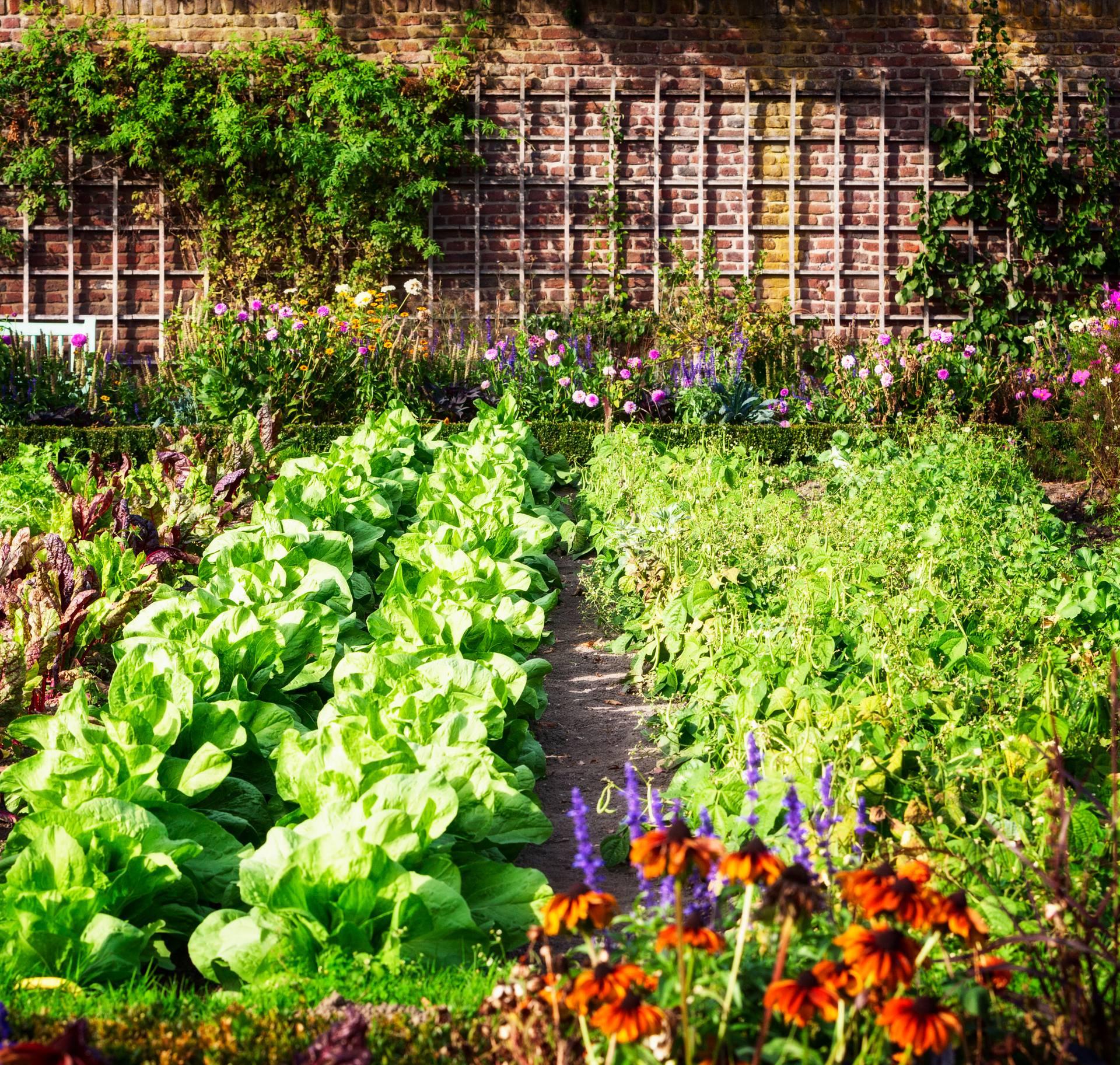 Dobri i loši susjedi: Koje povrće se smije saditi jedno do drugog