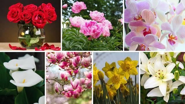 U kojem ste mjesecu rođeni? Svaki ima svoj cvijet i značenje