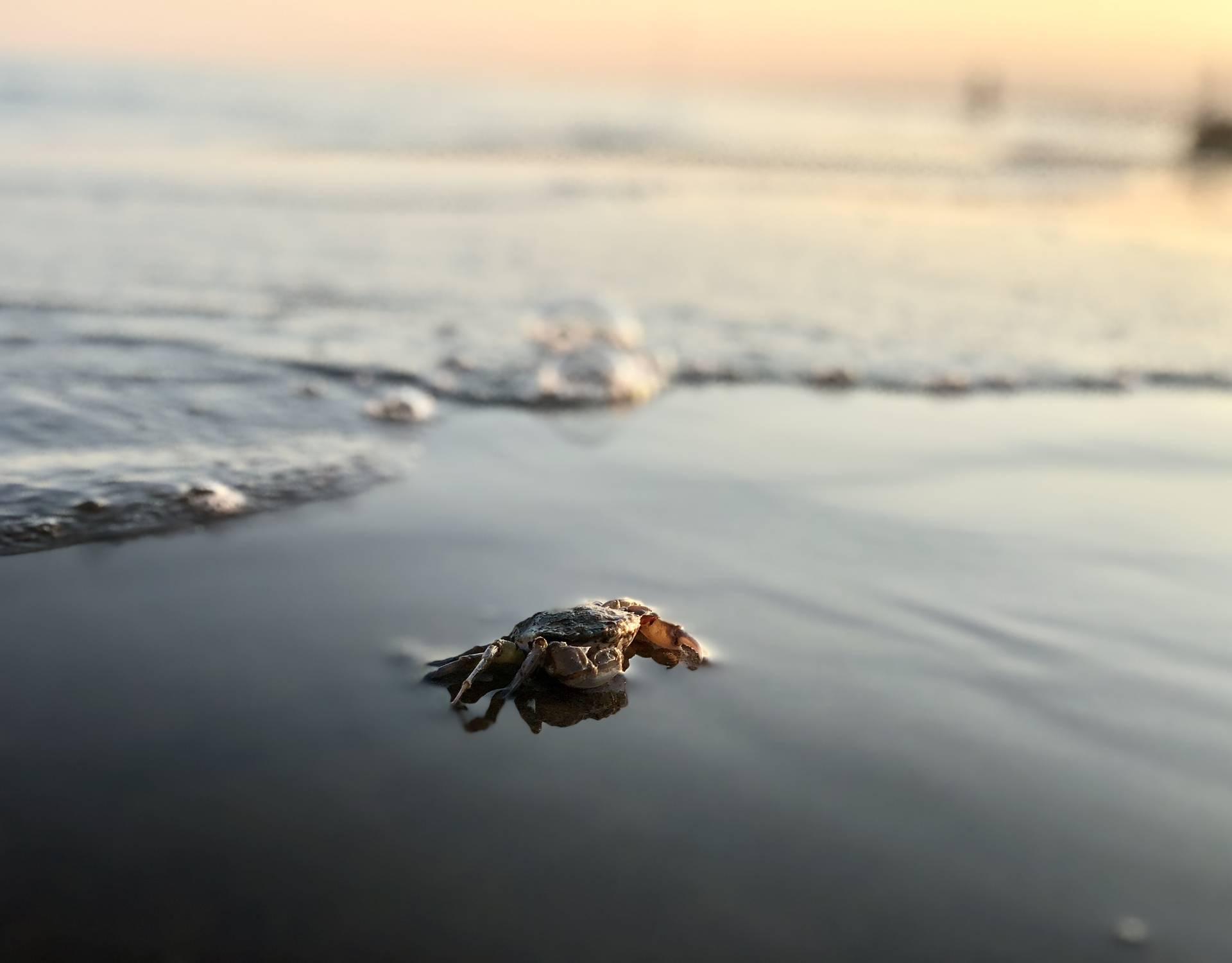 Osjećaju stres: Buka brodova može štetiti rakovima u moru