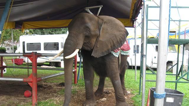 Najtužnija slonica na svijetu: Njezin život bio je pravi pakao