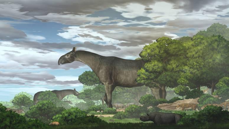 Otkrivena nova vrsta divovskog nosoroga - bio je viši i od žirafe