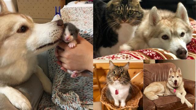 Kad srce prevlada: Kujica Lilo i maca Rosie prave su prijateljice