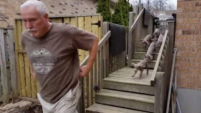 Urnebes: Ono što ovi psići rade na zapovijed je nevjerojatno