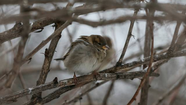 A sparrow perches on a tree in a park in central Kiev