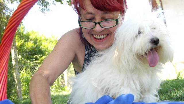 Na povratku s Murtera: Kujica u autu okotila čak pet štenaca