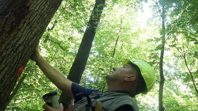 Izvlačili stabla iz šume: Dvojica teško ozlijeđena, u bolnici su