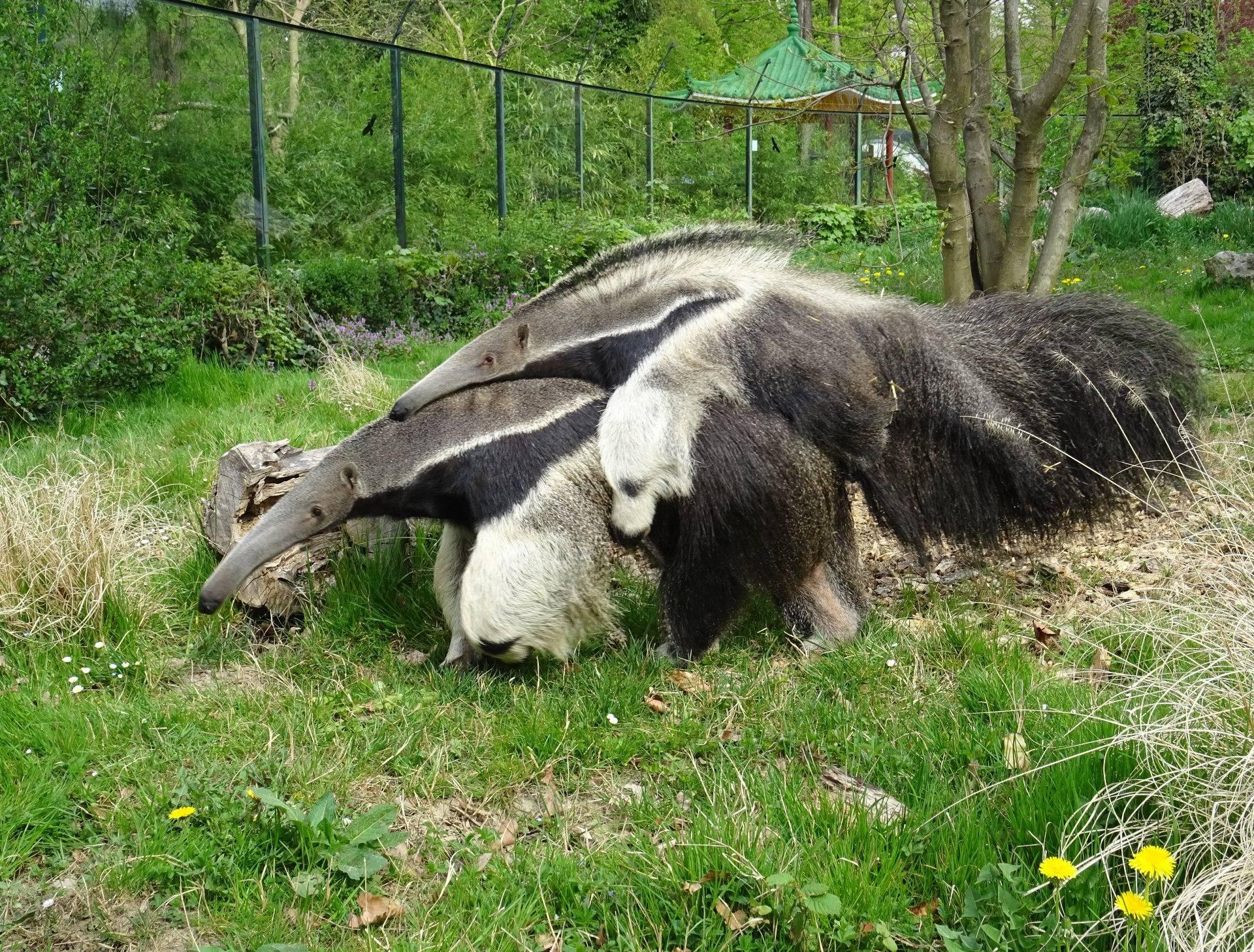 Zoološki vrt oduševio pričama i fotografijama za Majčin dan...