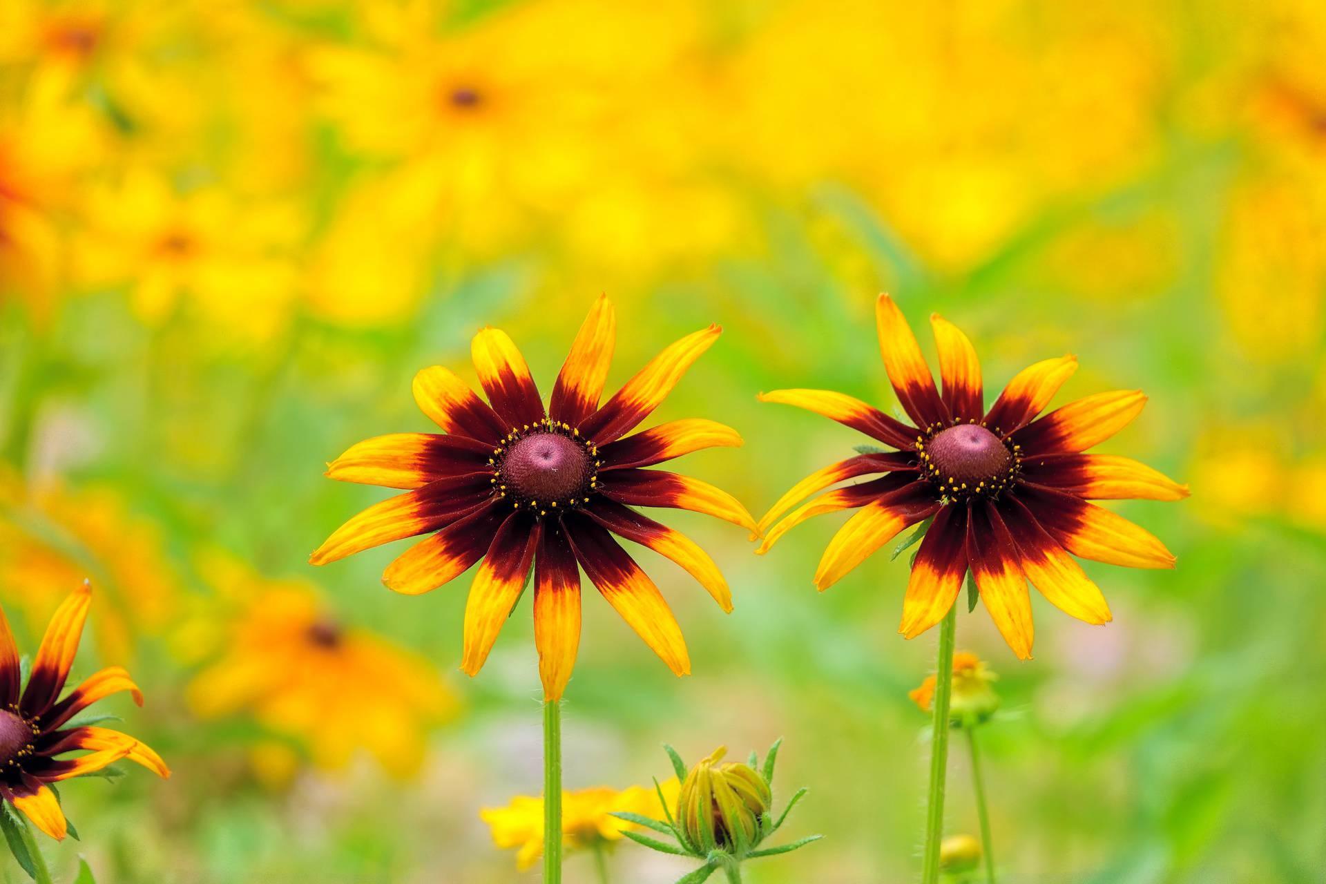 Cvijeće mijenja boju zbog sve izraženijih klimatskih promjena